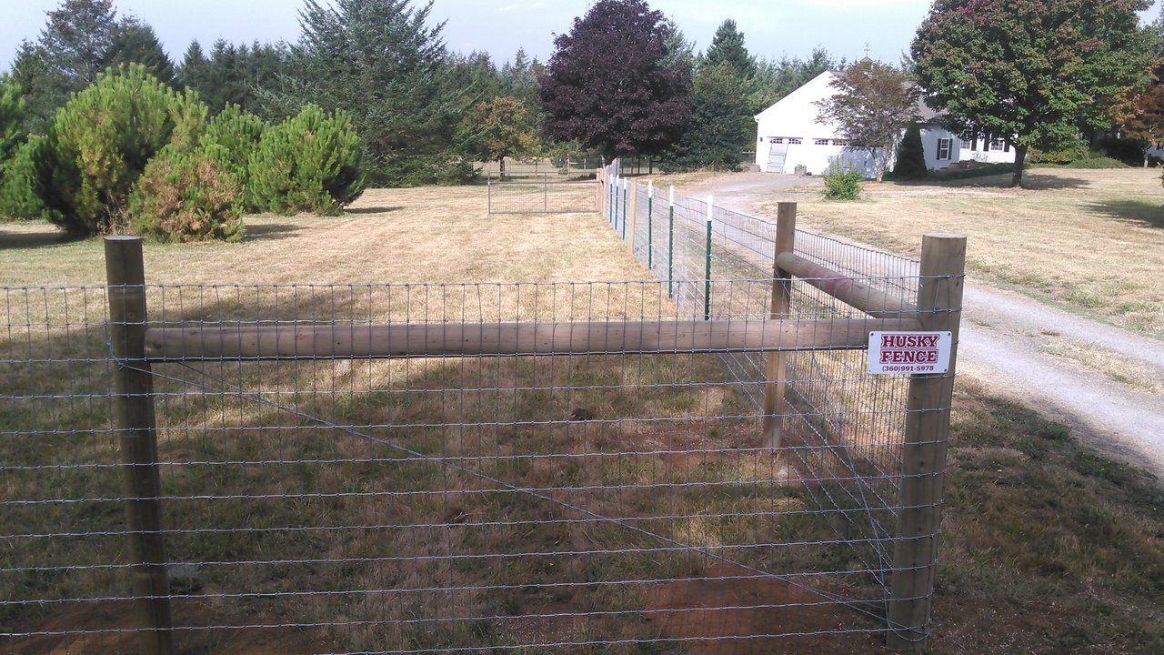 Wire Fences 4